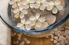 White wellness products. With cherry flowers royalty free stock images