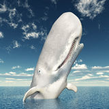 White Whale Stock Image
