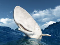 White Whale Royalty Free Stock Photography