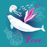 White whale in love Royalty Free Stock Image