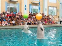 White whales Stock Photo