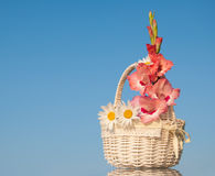 White wicker basket with pink and white flowers Royalty Free Stock Image