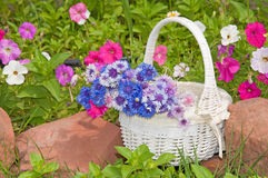 White wicker basket with spring flowers Royalty Free Stock Images