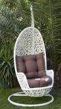 White wicker hanging egg chair. White resin wicker hanging egg chair in front of the tropical tree royalty free stock images