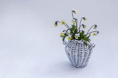 White wicker jug with yellow violets on a white background. Wicker jug with yellow violets on a white background Royalty Free Stock Photography