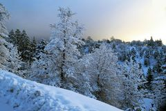 Trees and Slope Covered in Mountain Top Snow. White wiinter wonderland with snow covered forest of pine trees on steep alpine mountain Royalty Free Stock Images