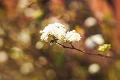 White wild flower. Delicate field flower in detail Stock Photos