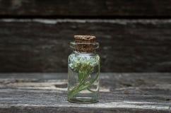 White wild flower essential oil. White wild flower essential oil on wooden background. Herbal medicine. Naturopathy royalty free stock image