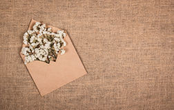 White wild flowers in a paper envelope. Backgrounds and textures. Copy space. White wild flowers in a paper envelope. Backgrounds and textures royalty free stock image