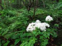White wild flowers royalty free stock image