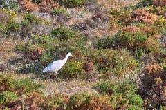 White wild heron royalty free stock photo