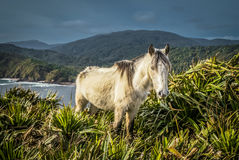 White wild horse Stock Photo