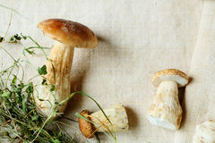 White wild mushroom and hay Royalty Free Stock Photos