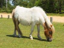 White wild pony The New Forest Hampshire England UK Royalty Free Stock Image