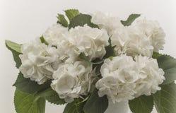 White wild roses isolated Stock Photography