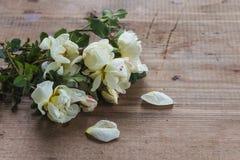 White wild roses Stock Images