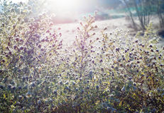White wildflower meadow field camomile daisy floral vintage texture Royalty Free Stock Photography