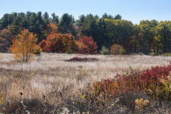 White wildflowers in open field and fall foliage, Mansfield, Con. Open field with white fruits of fall wildflowers, shrubs and trees, some with fall foliage Stock Photo