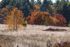 White wildflowers in open field and fall foliage, Mansfield, Con. Telephoto view of open field with white fruits of fall wildflowers, shrubs and trees, some with Royalty Free Stock Photo