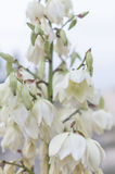 White wildflowers Royalty Free Stock Images