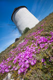 White windmill with flowers Royalty Free Stock Image