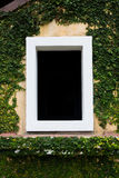 The white window in black background with creeper trees Stock Photos