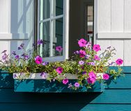 White window decorated with petunia flower box Royalty Free Stock Image