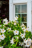 White Window and Flowers Royalty Free Stock Images