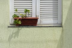 White window on green wall with plant case Stock Photos