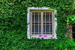 Tree window Stock Photography