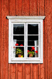 White window with red flowers Royalty Free Stock Photo