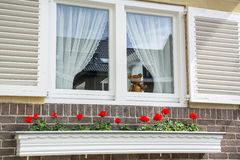 White window with red flowers and small toy bear Royalty Free Stock Photo