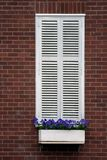 White window shutters. And flower box in a red brick wall Royalty Free Stock Images