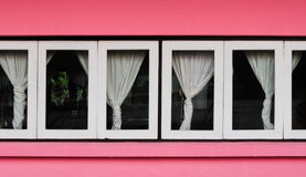 White Windows on Pink Wall with Curtain.  Royalty Free Stock Photo