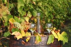 White wine autumn scene royalty free stock photography