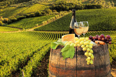 White wine with barrel on vineyard in Chianti, Tuscany, Italy. White wine with barrel on famous vineyard in Chianti, Tuscany, Italy Royalty Free Stock Photo