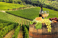 White wine with barrel on vineyard in Chianti, Tuscany, Italy royalty free stock photography