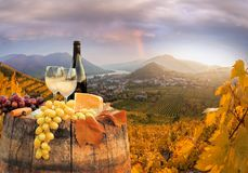 White wine with barrel on famous vineyard in Wachau, Spitz, Austria Stock Photography