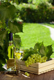 White wine bottle, glass, vine and grapes Royalty Free Stock Photography