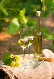 White wine bottle, glass, young vine and bunch of grapes against Stock Photography