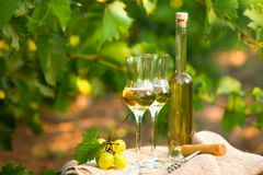 White wine bottle, glass, young vine and bunch of grapes against Royalty Free Stock Photos