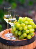 White wine bottle, glass, young vine and bunch of grapes against Stock Photos