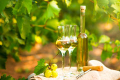 White wine bottle, glass, young vine and bunch of grapes against Royalty Free Stock Images