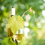 White wine bottle, grapevine and wineglass. Against green spring background Royalty Free Stock Photo
