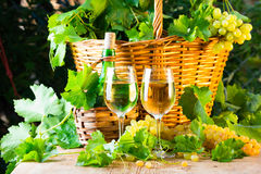White wine bottle, two glasses, bunch of grapes in basket Royalty Free Stock Photo