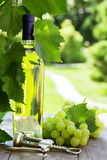 White wine bottle and white grape. On garden table Stock Photography