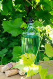 White wine bottle, young vine in the garden Stock Photography