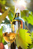 White wine bottle, young vine and glass. Against vineyard background Royalty Free Stock Photos