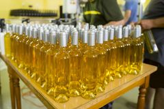 White wine bottles in a winery royalty free stock photos