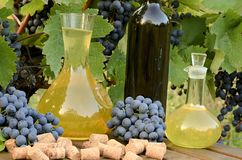 White wine in carafe and red wine in bottle on vineyard background. Stock Images